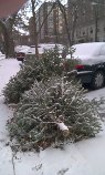 Trees curbside in winter